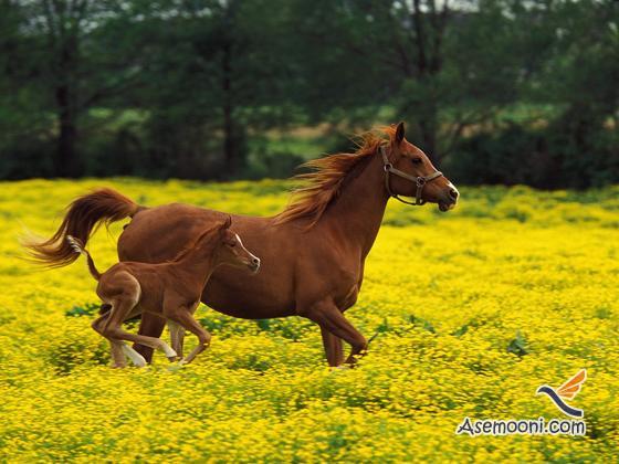Horse photos(13)