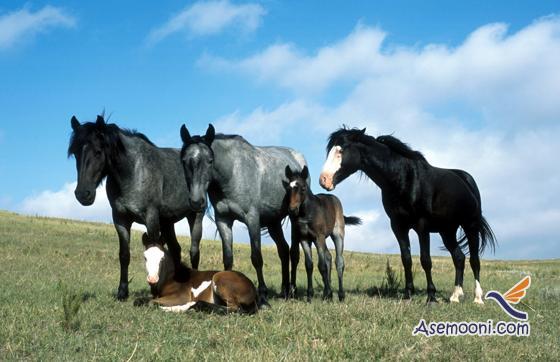 Horse photos(15)