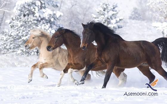 Horse photos(16)
