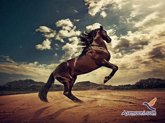 Horse photos(17)