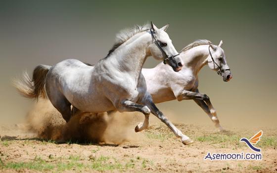 Horse photos(2)