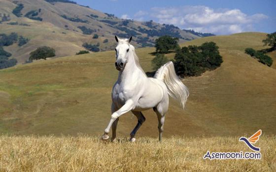 Horse photos(3)