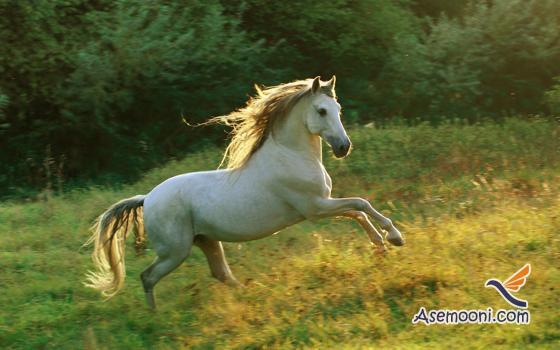 Horse photos(4)