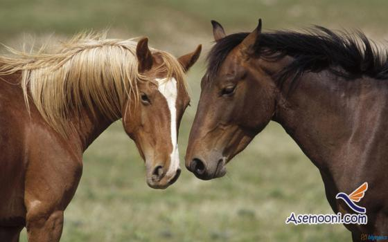 Horse photos(5)