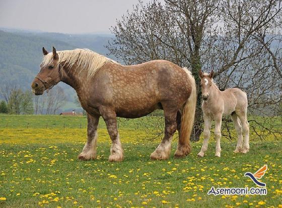 Horse photos(6)