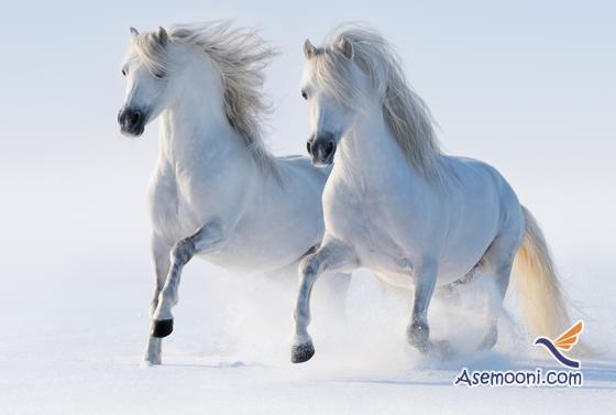 Horse photos(9)