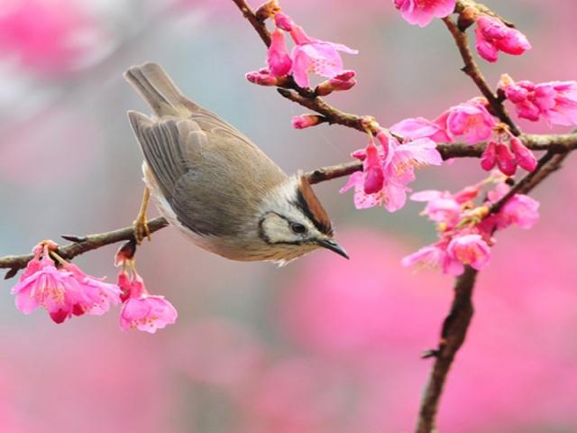 عکس بهار...