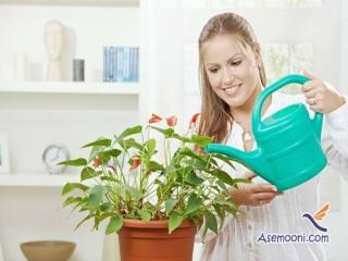 آبیاری گیاهان آپارتمانی هنگام سفر نوروزی