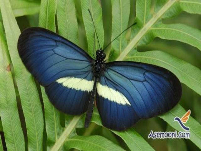 پیله و پروانه
