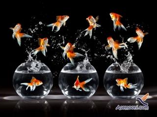 چطور ماهی قرمز عید را انتخاب کنیم ؟