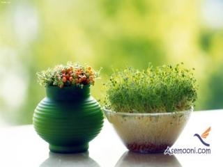 رسم جالب سبزه سبز کردن در نوروز