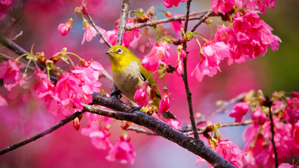 7027122-spring-flowers-and-bird
