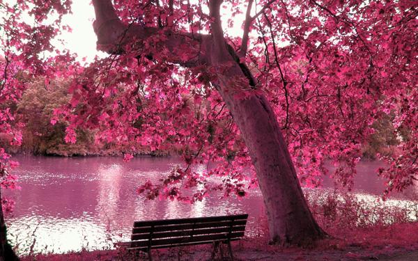 beautiful-spring-season-hd-image