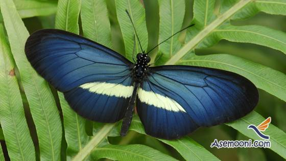 cocoons-and-butterfly