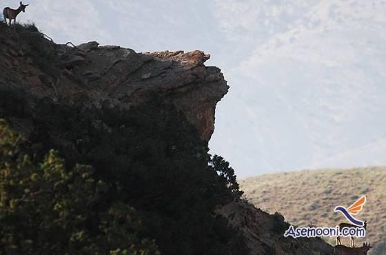 golestan-national-park(2)