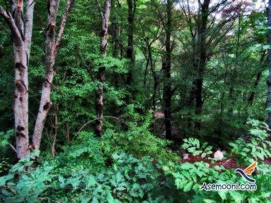 golestan-national-park(4)