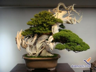 بن سای مجموعه ای از هنر و باغبانی