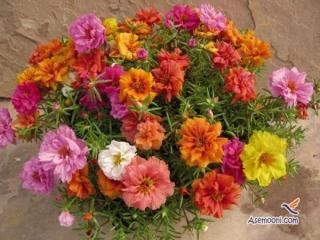 دوست داری در خانه گل داشته باشی؟
