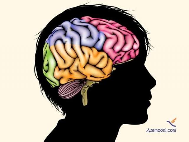 تاثیر درآمد خانواده بر ساختار مغز کودکان