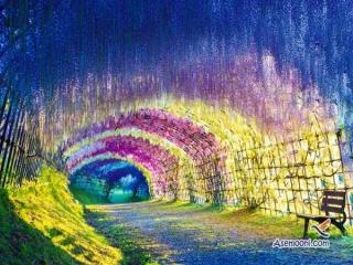 تونل رویایی و باور نکردنی پر از گل ویستریا در ژاپن