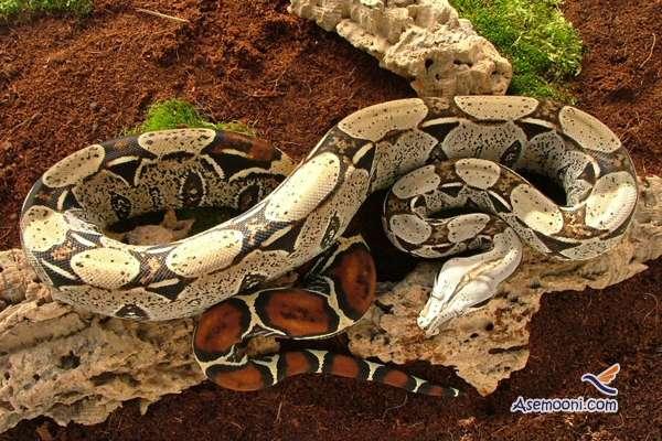 ten-dangerous-animal-on-earth(5)
