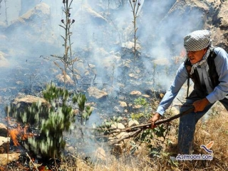 آتش سوزی در جنگل های شلم ایلام مهار شد