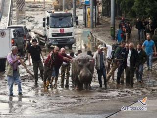 پایتخت گرجستان تبدیل به باغ وحش شد