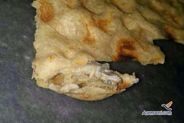 lizard-found-in-bread