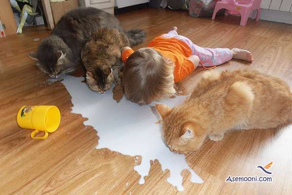 the-kids-and-their-cat(1)