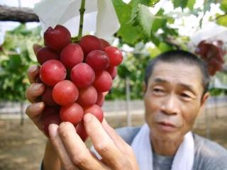 انگور 27 میلیون تومانی