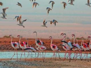 جانوران چگونه می فهمند چه موقع و به کجا مهاجرت کنند؟