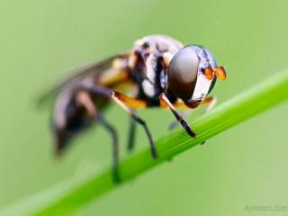 ساخت چسبی جالب با الهام از پای حشرات