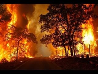 داستان آتش سوزی جنگل های بلوط ایلام چه بود؟!