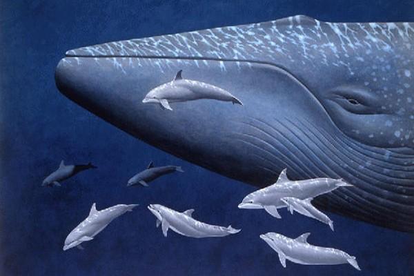 giant-animal-on-earth(1)