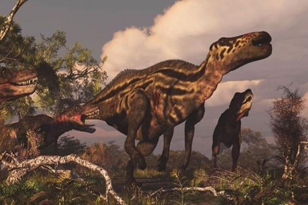 giant-animal-on-earth(2)