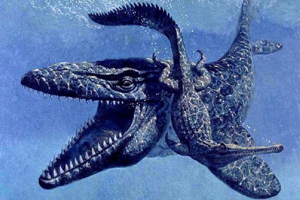 giant-animal-on-earth(3)