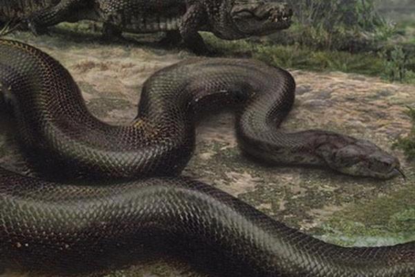 giant-animal-on-earth(4)