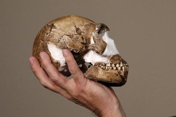 humanoid-discovery(2)