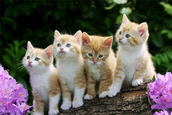 maintenance-cat-tips(3)