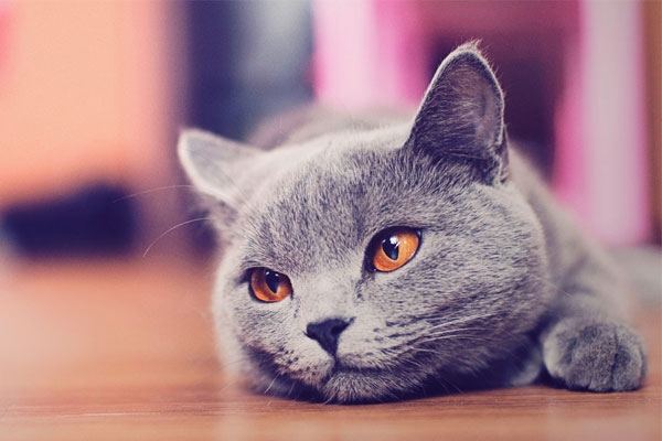 maintenance-cat-tips(4)