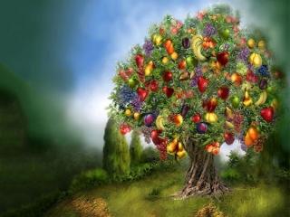شما میوه کدام درخت هستید؟