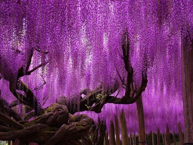 درخت های زیبای جهان