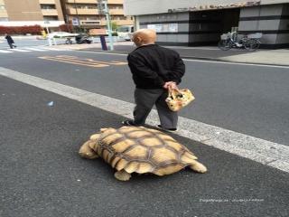 حیوان خانگی عجیب  پیرمرد ژاپنی