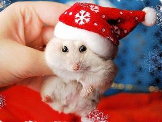 حیوانات در جشن های کریسمس