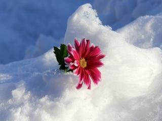 چگونه در زمستان گل پرورش دهیم؟