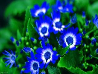 مراقبت و نگهداری از گل ها در فصل زمستان
