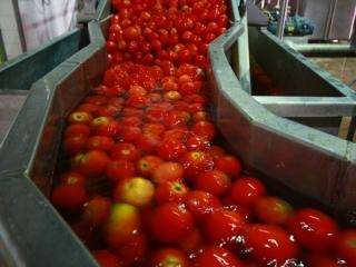 فهرست ترسناک از تقلب های رایج در خوراکی های ایران
