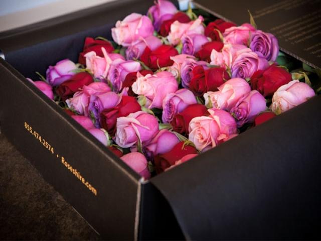 زیبا ترین گل های رز