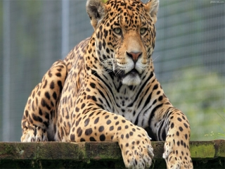 اولین باغ وحش در تهران