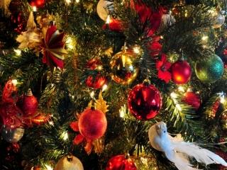 عکس هایی از درخت کریسمس